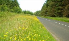 The_Cushendall_Road_near_Ballycastle.jpg